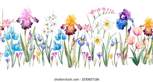 Watercolor floral spring horizontal pattern, iris flowers, daffodil, pink Tulip, freesia, crocuses, wild iris. Floral plant banner. retro colors