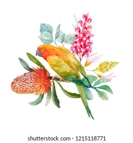 Watercolor floral tropical print. Yellow parrot lovebirds, flowers Banksia.  plants,  Grevillea.  tropical illustration