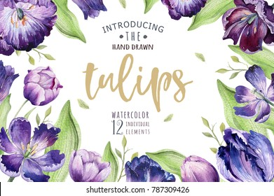 Watercolor floral tulip backgraund. Isolated spring illustration. Watercolour violet tulip plant. Purple blossom drawing.