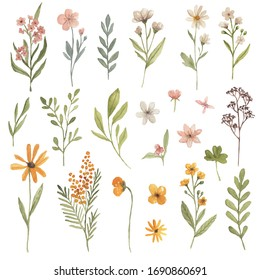 Watercolor floral vintage elements flowers leaves branches hand painted pastel