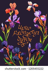 Watercolor floral wreath with iris flowers. Colorful botanica card. Russian text: iris blossomed out. Modern brush calligraphy. Great for decorating.