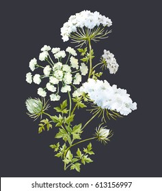 Watercolor flower bouquet, white flowers queen anne's lace