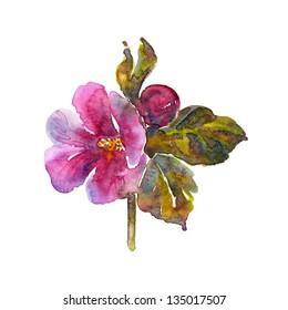 Watercolor Flower Mallow