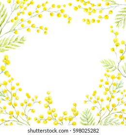 Watercolor flower mimosa.  greeting spring card
