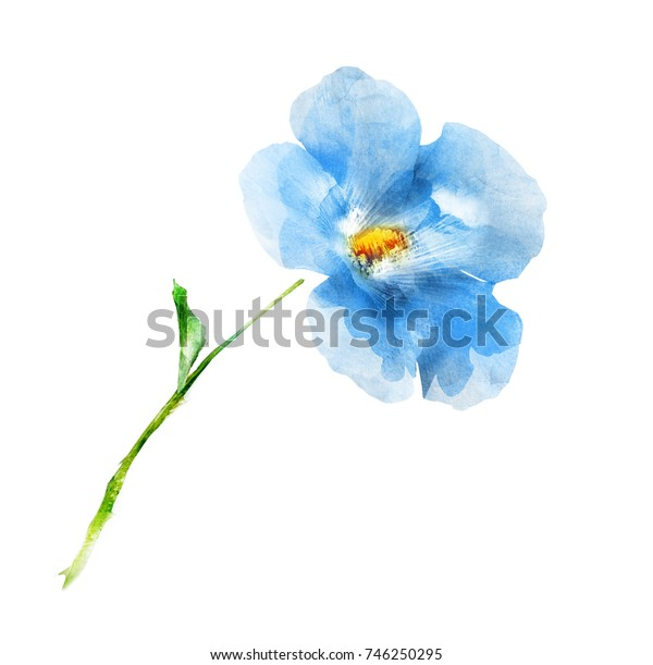 Watercolor flower on white