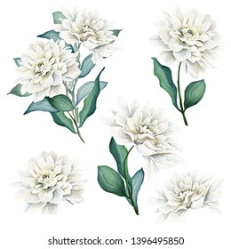Watercolor Flowers and Bouquets Set. Dahlia. White dahlia. Floral illustration. Leaves and buds. Botanic composition. Dahlia Bouquets. Flower Head