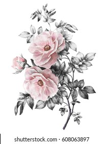 watercolor flowers. floral illustration in Pastel colors, pink rose. branch of flowers isolated on white background. gray Leaf and buds. Cute composition for wedding or greeting card. bouquet