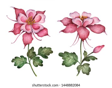 Watercolor flowers, hand painted floral illustration, set of columbines isolated on a white background.