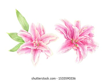 Watercolor flowers illustration. Isolated composition. Herbal botanical illustration. Good for greeting cards, scrapbook and etc.