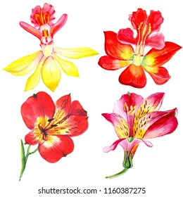 Watercolor flowers isolated on white background.