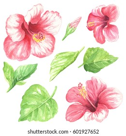 Watercolor flowers with leaves, hand drawn colorful tropical hibiscus set, isolated on white background.