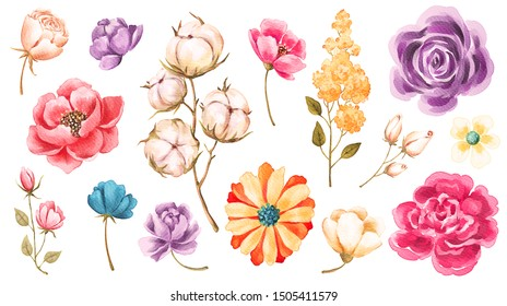 Watercolor flowers, leaves, plants, cotton branch. Autumn collection isolated on white background