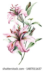 Watercolor flowers lilies. Floral bouquet, clip art. Arrangement with lily perfectly for printing design on invitations, cards, wall art and other. Isolated on white. Hand painted.