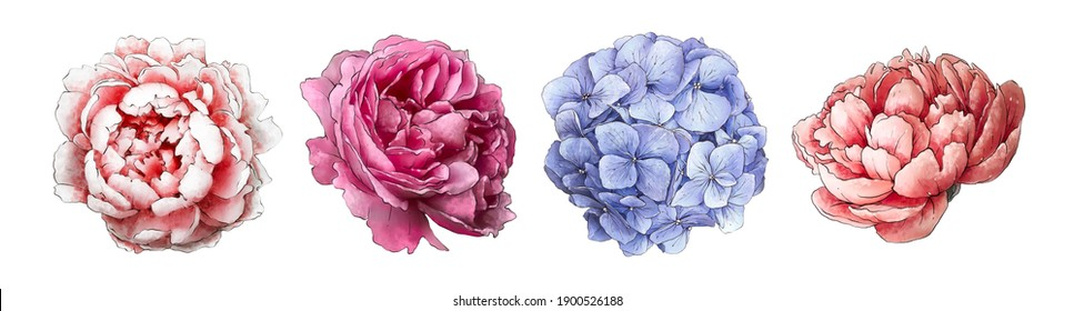 Watercolor flowers Peonies and hydrangea. Wedding delicate flora. Vintage flowers. Botanical hand drawn illustration. Isolated flowers on white background.