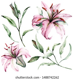 Watercolor flowers pink lilies and green leaves set. Floral illustrations isolated on white background. Hand drawing. Perfectly for wedding, birthday, party, other greetings design.