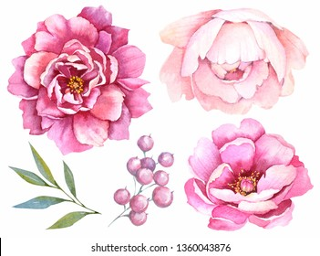 Watercolor flowers. Setof peonies on a white background