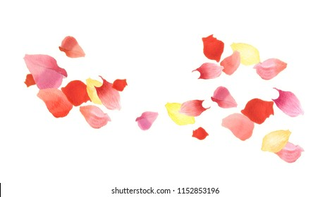 Watercolor flying petals isolated on white background. Wedding composition