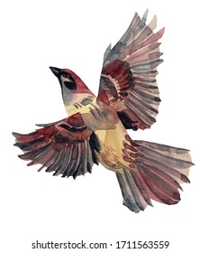 Watercolor flying sparrow hand-drawn bird art creative animal object isolated on white background