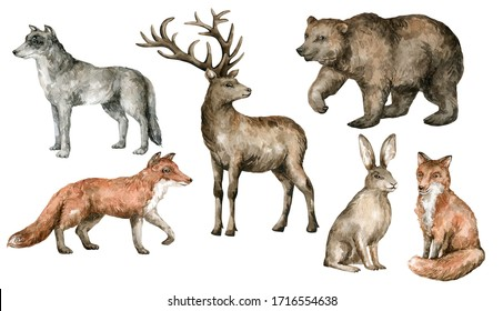 Watercolor forest animals. Wild wolf, fox, deer, bear, hare in realistic style. Hand painted wildlife illustration isolated on white background. Team of forest friends.