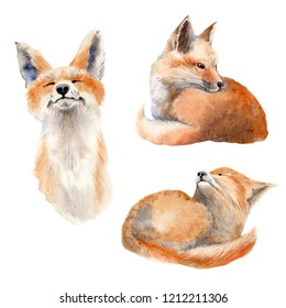 Watercolor fox  illustration.  Perfect for print, christmas and new year  greeting cards