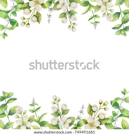 Watercolor Frame Flowers Jasmine Mint Branches Stock Illustration ...