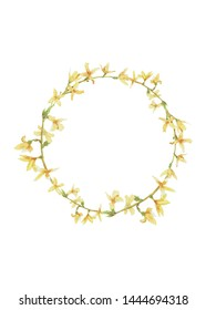 Watercolor frame of Forsythia flower. Illustration isolated on white background. Clipping path included.