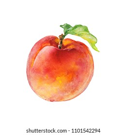 Watercolor fresh peach. Hand drawn ripe fruit on white background. Painting food illustration
