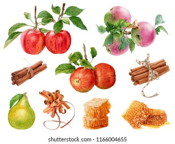 Watercolor fresh, ripe red and pink apples with leaves, apple branches, cinnamon sticks, pear, honeycombs isolated on white background.  Healthy, natural food. Fall harvest.