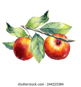 watercolor fruit apple branch on white background