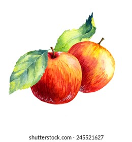watercolor fruit apple  on white background