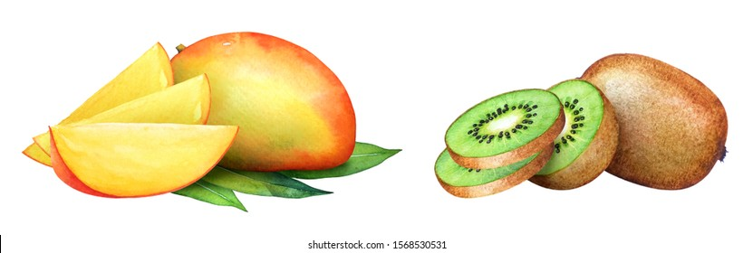 Watercolor fruit collection. Kiwi and mango with slices isolated on white background
