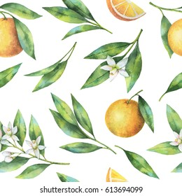 Watercolor fruit orange seamless pattern of flowers and leaves isolated on white background. Organic products for the design of healthy food, kitchen, market, menu, textiles.