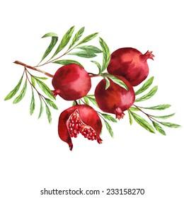 watercolor fruit pomegranate branch