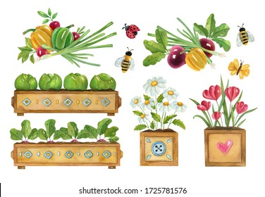 Watercolor gardening set with plants, vegetables, flowers, and insects. Bright hand-painted illustration of gardening seedlings, cabbages, beetroots, radish camomiles, and floral compositions.