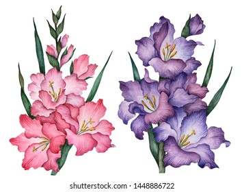 Watercolor gladiolus, hand drawn floral illustration, set of flowers isolated on a white background for greeting cards or invitations.