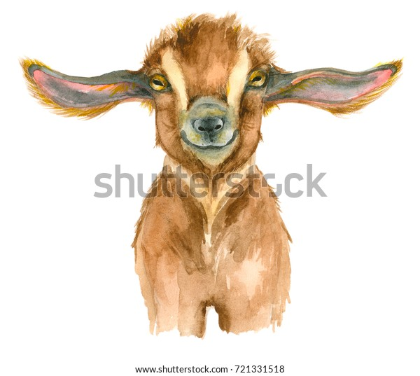 Watercolor Goat Head Isolated On White Stock Illustration 721331518