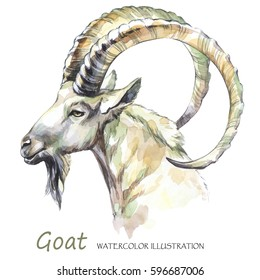 Watercolor goat on the white background. Mountain animal. Wildlife art illustration. Can be printed on T-shirts, bags, posters, invitations, cards, phone cases, pillows. Place for your text.