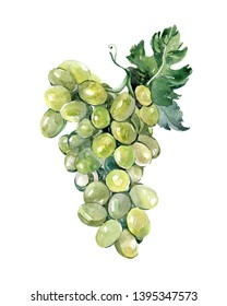 Watercolor grape fruits illustration isolated on white background