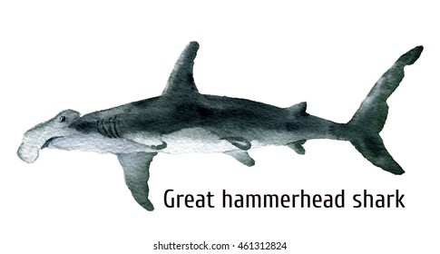Watercolor Great hammerhead shark. Illustration isolated on white background. For design, prints, background, t-shirt