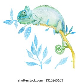 Watercolor green chameleon.Illustration. Template. Hand drawn, close-up