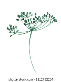 Watercolor green leaves gypsophila hand painted isolation.