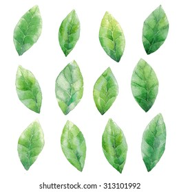 Watercolor green leaves pattern background