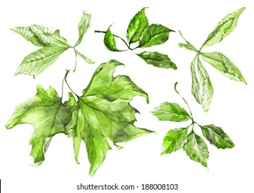 Aquarellgrüne Blätter von Sycamore, Traube und Kastanien