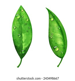 Watercolor green leaves with water drops, dew set close up isolated on white background