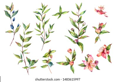 Watercolor Green Myrtle. Set of Vintage Watercolor Green Leaves, Twigs, Branches, Blooming flowers of Myrtle. Botanical Natural Watercolor Illustration Isolated on White Background.