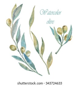 Watercolor green olives. Olive branches.
