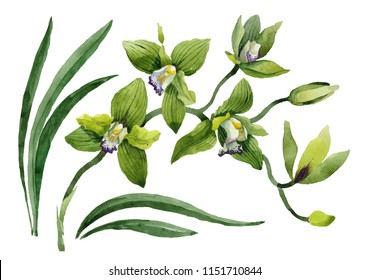 Watercolor green orchid flowers. Floral botanical flower. Isolated illustration element. Aquarelle wildflower for background, texture, wrapper pattern, frame or border.