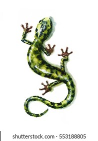 Watercolor Green Salamander Hand Painted Lizard Illustration isolated on white background