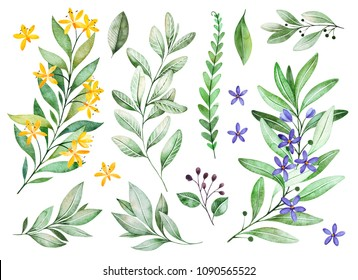 Watercolor greens collection.Texture with flowering branches, small flowers,leaves,fern leaves,foliage.Perfect for wedding,invitations,greeting cards,quotes,pattern,bouquet,logos,Birthday cards,bridal