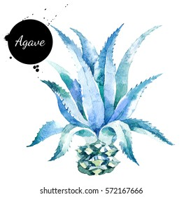 Watercolor hand drawn agave plant illustration. Painted sketch isolated on white background